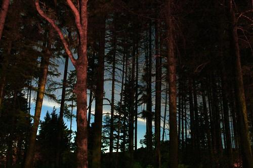 Oregon Sky