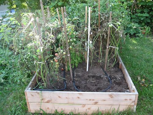 Four Plants Gone