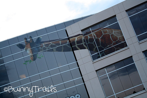 window giraffe 2
