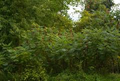 DSC_0028 (kleptobob) Tags: park mississauga floraandfauna erindale