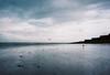 moody moring (lomokev) Tags: sea bird beach swimming nikon moody kodak seagull gray kodakportra400vc portra nikonos kodakportra400 kodakportra deletetag nikonosv nikonos5 nikonosfive fime:name=090724nikonosvvc34 roll:name=090724nikonosvvc