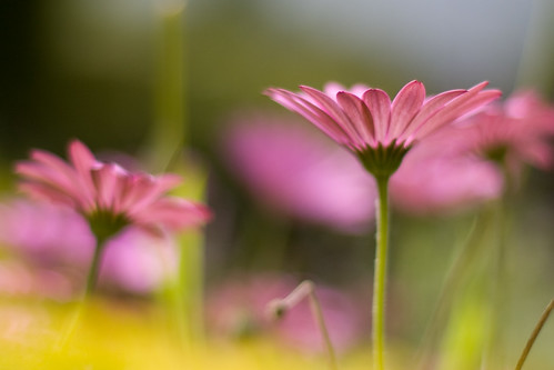 IMG_8988-2 (by harold.lloyd (won't somebody think of the bokeh?))