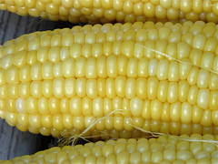 ear of corn (normanack) Tags: summer yellow garden corn vegetable maize