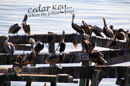Cedar Key ... Where the Pelicans Play