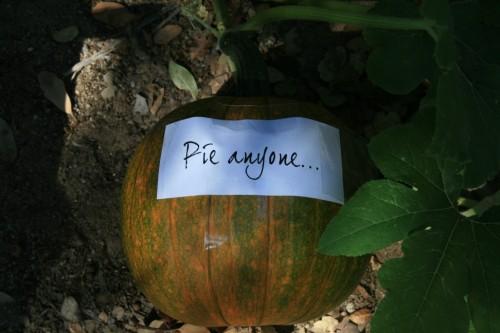 pumpkin2009 005 (500 x 333)