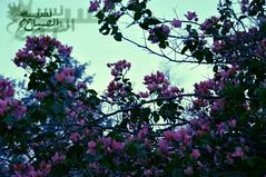 "(] N Al97""[) Tags:    nasem        al9ba7"