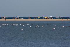 i bagnanti (gufino (out for awhile)) Tags: sardegna italia mare villasimius cielo ombrelloni sabbia striscia fenicotteri stagno bagnanti
