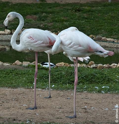 birds park-19