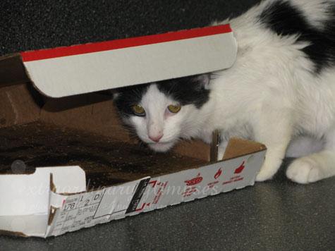 DotsinPizzaBox_Oct092009_0001web