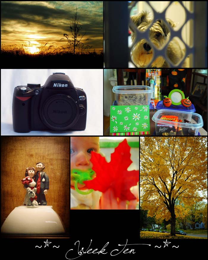 Week 10 blogsize