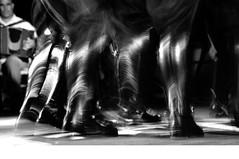 CORSA DEGLI SCALZI - 2009 / FESTA IN PIAZZA (albertofanni) Tags: poverty show street city travel light party portrait urban blackandwhite bw music food woman usa india white chicago newyork man black paris male men film portugal southamerica nature water girl rain sport festival architecture night digital america 35mm canon children photography eos israel town photo blackwhite nikon asia flickr downtown peace photographer bangkok palestine flag indian politics iraq religion crowd protest streetphotography photojournalism documentary police 2006 demonstration tradition 2008 2009 2007 reportage 5photosaday 400d