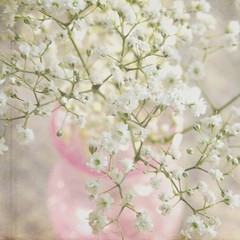 * (KimFearheiley) Tags: white babysbreath florabellatextures simplewhiteflower champagnewarm