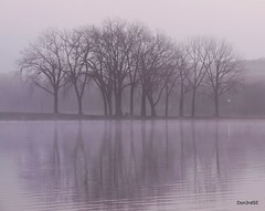 Gray's Lake Grove - November Fog (Don3rdSE) Tags: morning november autumn trees lake fall nature water fog sunrise canon landscape eos dawn natural bare iowa ia soe desmoines 50d abigfave canon50d goldmedalwinner platinumheartaward goldstaraward platinumsuperstar spiritofphotography grayslakepark oltusfotos don3rdse mygearandmepremium mygearandmebronze
