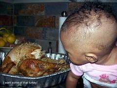 Marlie eyeing turkey