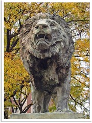 New York 2009 - Scholar´s Lion