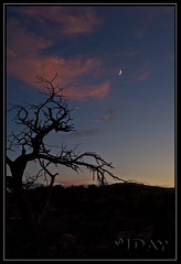 Desert Twilight (jeandayphotography.com) Tags: sunset red moon tree fall silhouette rock evening utah desert canyonlandsnationalpark moab 2009