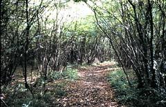 Dundridge_Woods_08 (wallygrom) Tags: england woods hampshire copse bishopswaltham dundridge phrympthcopse