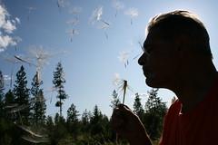 Dandelion Dad (Alexandra Taco) Tags: profile silouette blow dandelion seeds silouettes makeawish manwithflower blowingdandelion blowingseeds mansprofile seedsintheair dandelionseedsflying humansilouette manwithdandelion