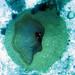 Sea Sponge Bucket