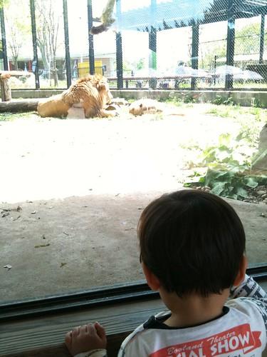 大森山動物園