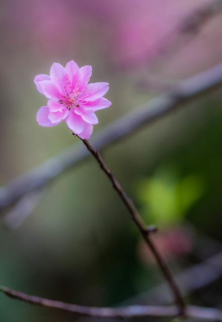 gently rendering spring