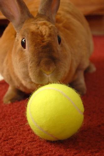 Wimble-bun!