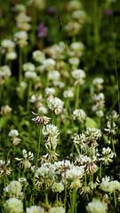 Los flower! (Henning_Christensen) Tags: flower awesome blomst awesomeness larvik grimstad henningchristensen larviktoppen morvigsanden