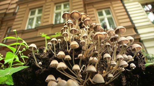 Mushrooms - Photography