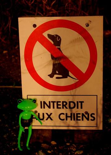 [Wonder Frog Wanda] Grenouille voit la vie en vert 3753703500_684de98714