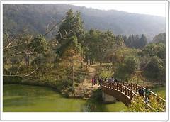 向天湖湖上小橋