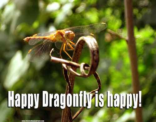 Happy Dragonfly is Happy!