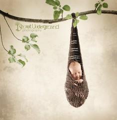 On the tree top (Trifin) Tags: baby tree texture girl nikon knit gimp newborn hanging prop rosepetal d700 nikond700 secretundergroundphotography ~creativity~