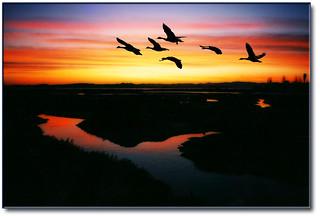 Sunrise Over The Corte Madera, CA Marsh