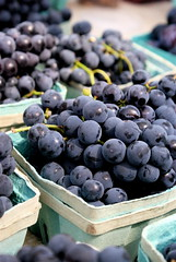 Concord Grapes (drew*in*chicago) Tags: red food chicago hot macro cute green fruit dof purple farmersmarket bokeh sunny vegetable delicious produce 2009 daleyplaza drewinchicago