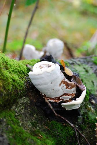 SS38_Mushrooms[2009]