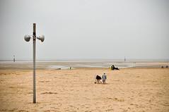 Music for the masses (M.Pat) Tags: normandie plage marche manche basse houlgate marée marche2 crève5 crève2 crève3 crève4 crève1