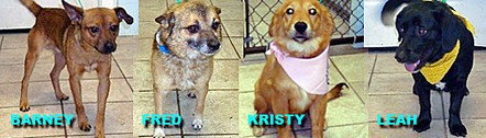 Kinship Circle - 2009-09-25 - Cobb County Dogs Need Rescue 02 by smiteme