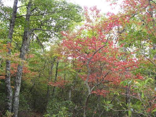 Nice woods