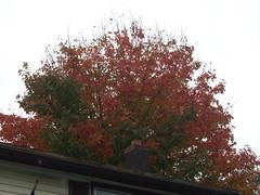 Tree_101309