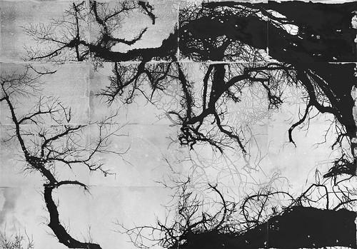 Scrivere dalla foresta dei segni. Appunti sull'arte di Federico Gori