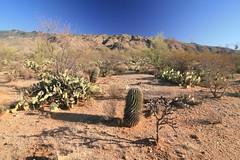 IMG_9643 (simon_travelboy) Tags: arizona tucson saguaronationalpark