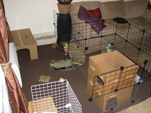 new bunny area 2