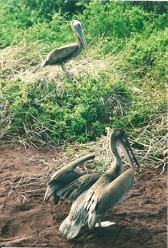 Galapagos-Rabida (5)