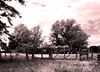 "Estancia ""La Victoria"" / ""The Victory"" Ranch (Claudio.Ar) Tags: ranch trees bw santafe nature topf25 argentina landscape sony estancia dsc pampa h9 visiongroup sirhenryandco claudioar claudiomufarrege artofimages"