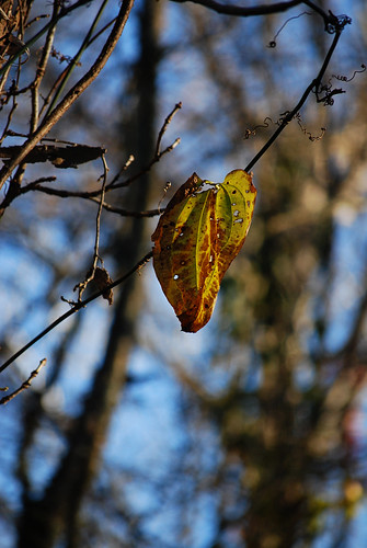 SS48_Solo_Leaf[2009]