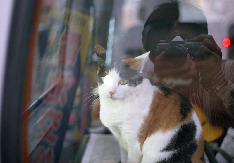 車の中の猫と僕