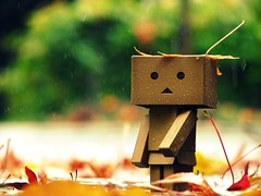 The Autunm Leaves (willycoolpics.) Tags: cold fall leaves rain weather robot cardboard raining picnik autunm danbo revoltech danboard thisisbeforeshegotascrathonherhead