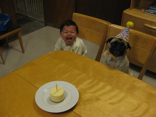 Happy 6th Birthday Shelby!