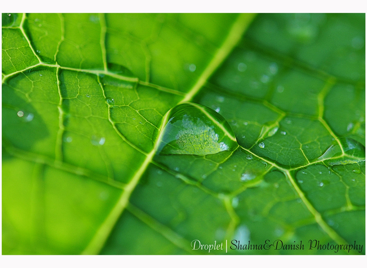 droplet green