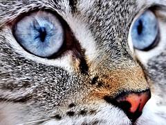 Delve (mirando_t) Tags: cats animals spain eyes leon delve